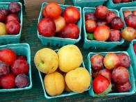 Stone Fruit Recipes + Facts