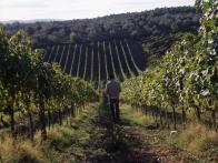 david rocco visits vineyards of chianti