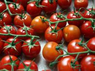 CC-Farmstand-Copeland_Cherry-Tomatoes_s4x3