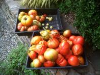 52 Weeks Fresh: Prepping for Tomato Bounty