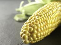Guide to Corn
