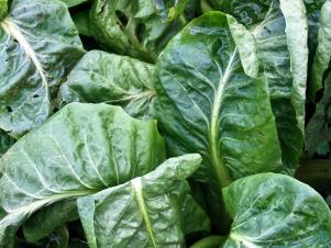 CC-Superfoods_spinach_s3x4