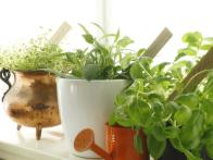 Grow a Kitchen Herb Garden in 5 Easy Steps