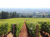 Behind the Wine: It's Harvest Season in Oregon